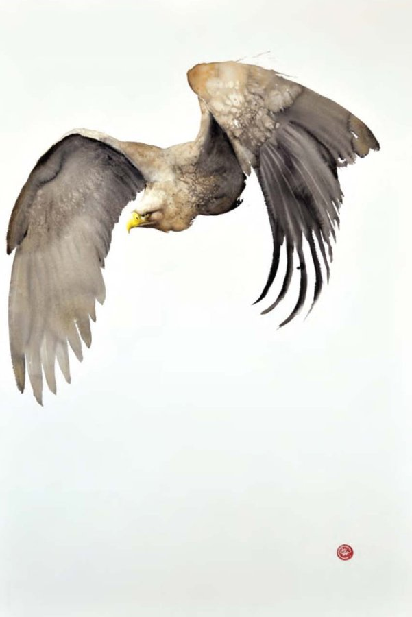 <p>White Tailed Eagle</p>