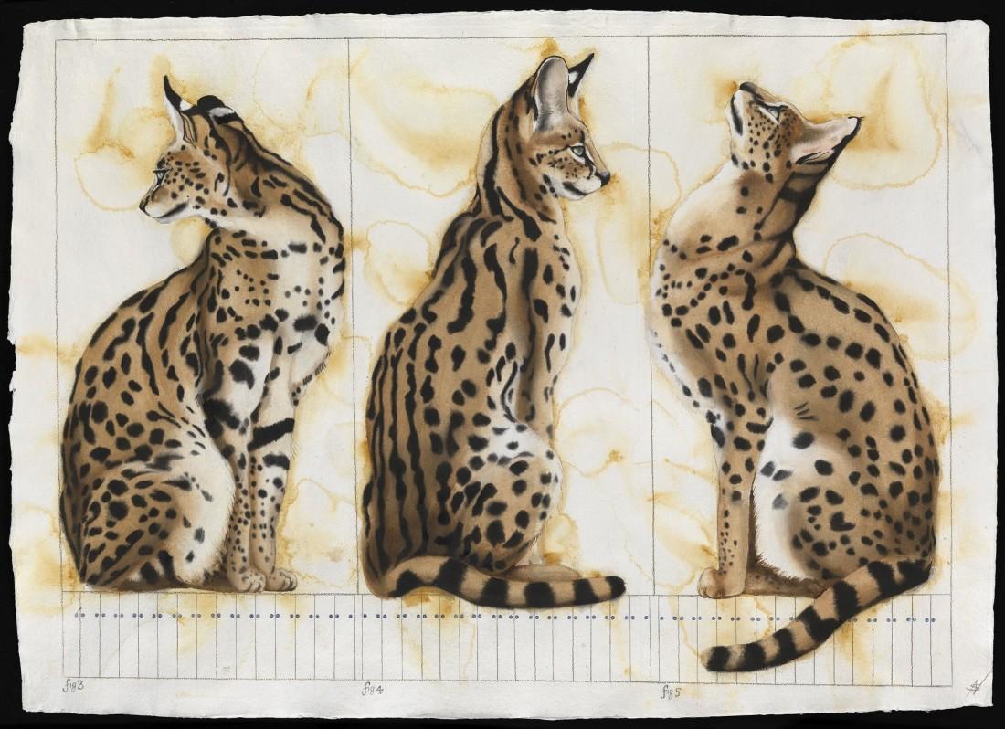 """<p>Several Serval, Watercolour, 37"""" x 53"""", Price: £5,400</p>"""