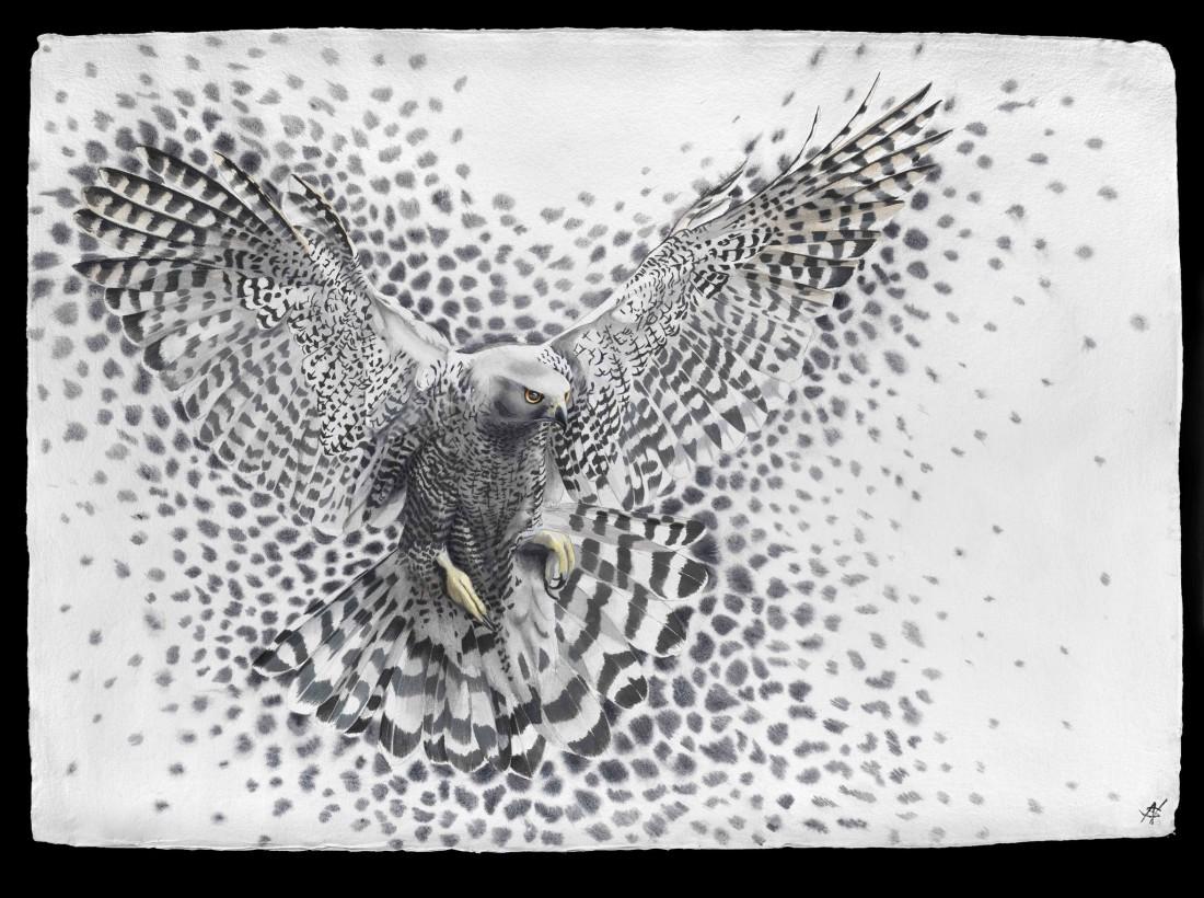 "<p>Molecule - Hawk, Watercolour, 37"" x 53"", Price: £5,400</p>"