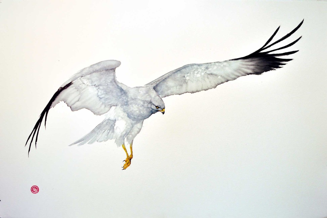 <p>Karl Martens. <em>Northern Harrier</em>.&#160; Watercolour. 102x154cm.&#160; Price: &#163;6,500</p>