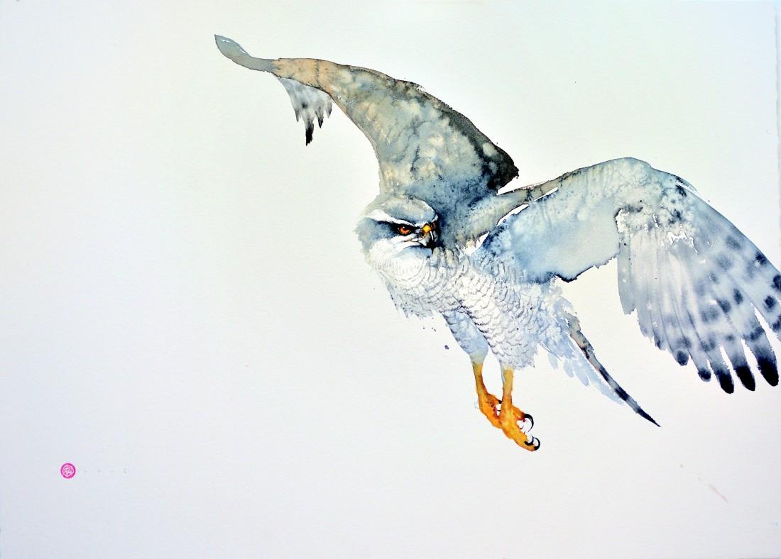 <p>Goshawk I</p><p>Watercolour</p><p>26&#34; x 37&#34;</p>