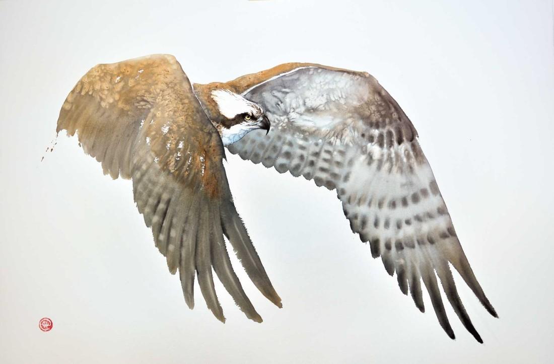 <p>Osprey II</p><p>Watercolour</p><p>39 1/2&#34; x 59&#34;</p>