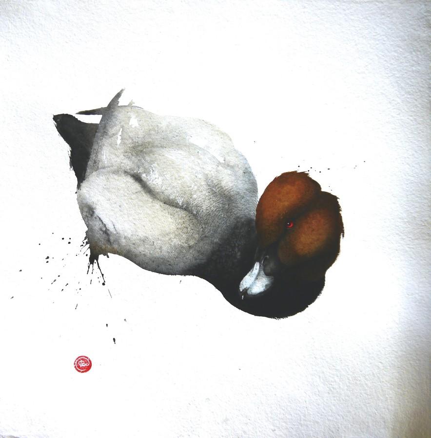 <p>Pochard, Male</p><p>Watercolour</p><p>39&#34; x 39&#34;</p>