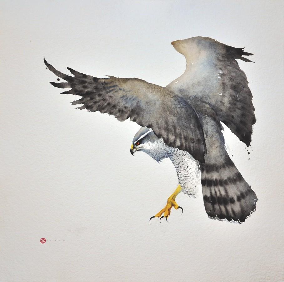 <p>Goshawk II</p><p>Watercolour</p><p>38&#34; X 38&#34;</p><p>&#160;</p>