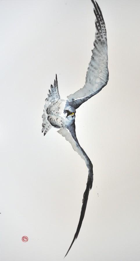 <p>Peregrine Falcon II</p><p>Watercolour</p><p>59&#34; x 39 1/2&#34;</p>