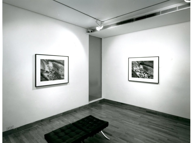 <p>LINDA MCCARTNEY Installation View</p>