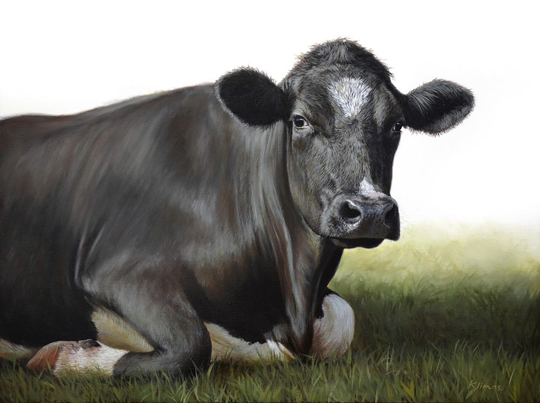 "Alexandra Klimas ""Hannah the Cow"" Oil on canvas 60 x 80 cm"