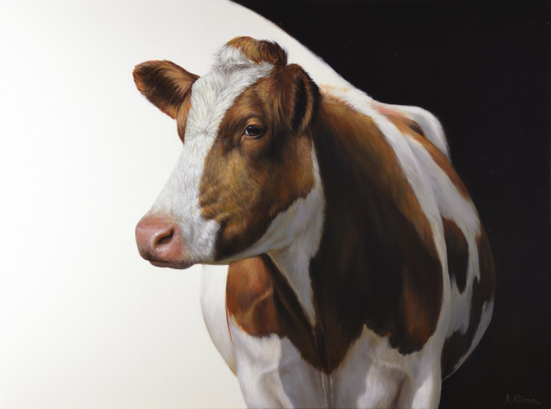 Alexandra Klimas Aukje the Cow oil on canvas 60 x 80 cm