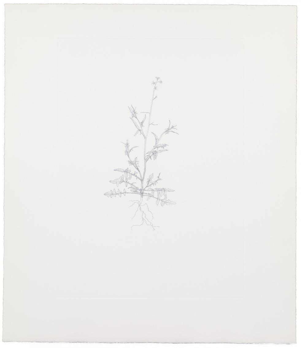 Nourishment (portfolio), 2002