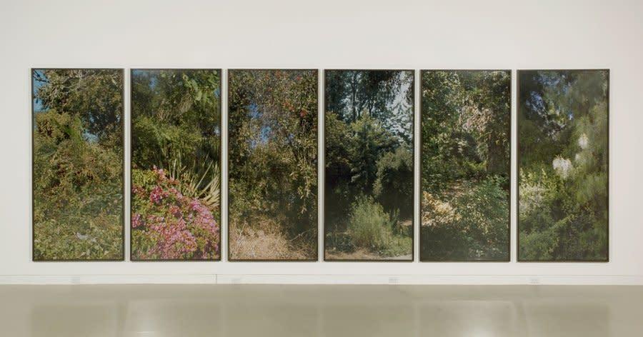 Island Flora series, 2005