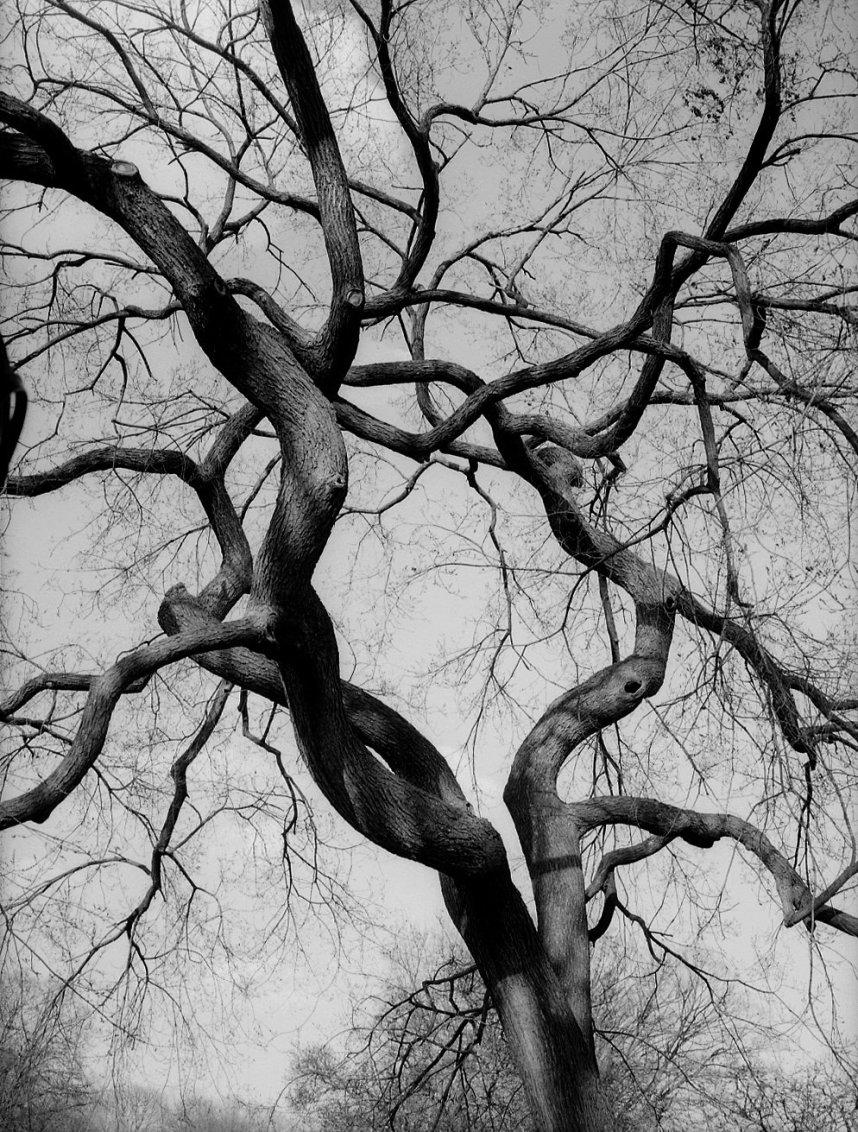 Figure (Tree) NYC, 2012