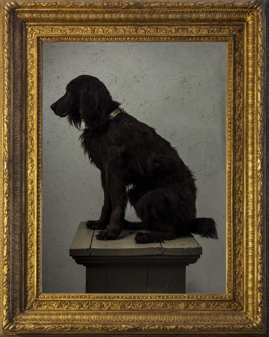 Domestic dog 1