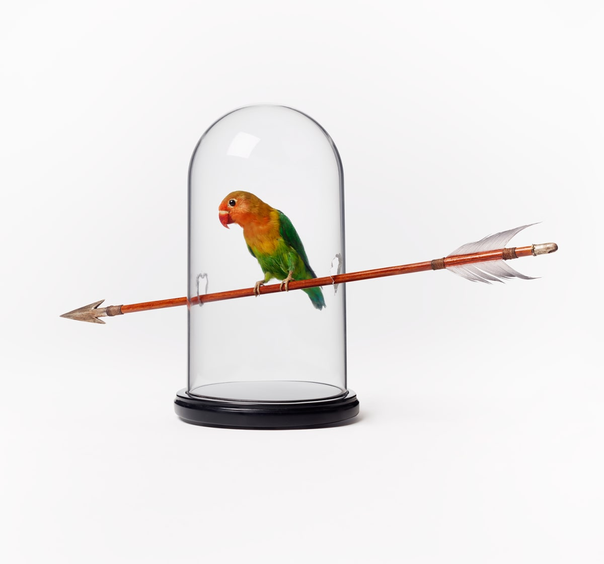 Nancy FOUTS, Bird on Arrow, 2013