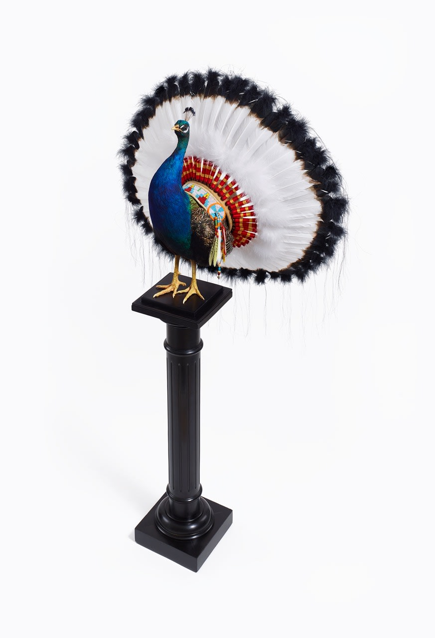 Nancy FOUTS, Indian Peacock, 2017
