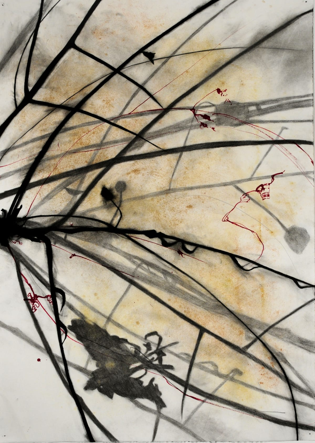 Susan Davidoff, Palo Verde Azul 1 | Chicago Art Source
