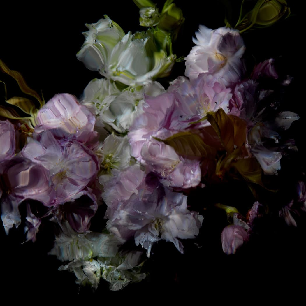 Alexander James Hamilton Floral Study [0503], 2012 Chromogenic photograph, mounted to polished aluminium with a/r acrylic face (Diasec) 11 3/4 x 11 3/4 in 30 x 30 cm Edition of 5