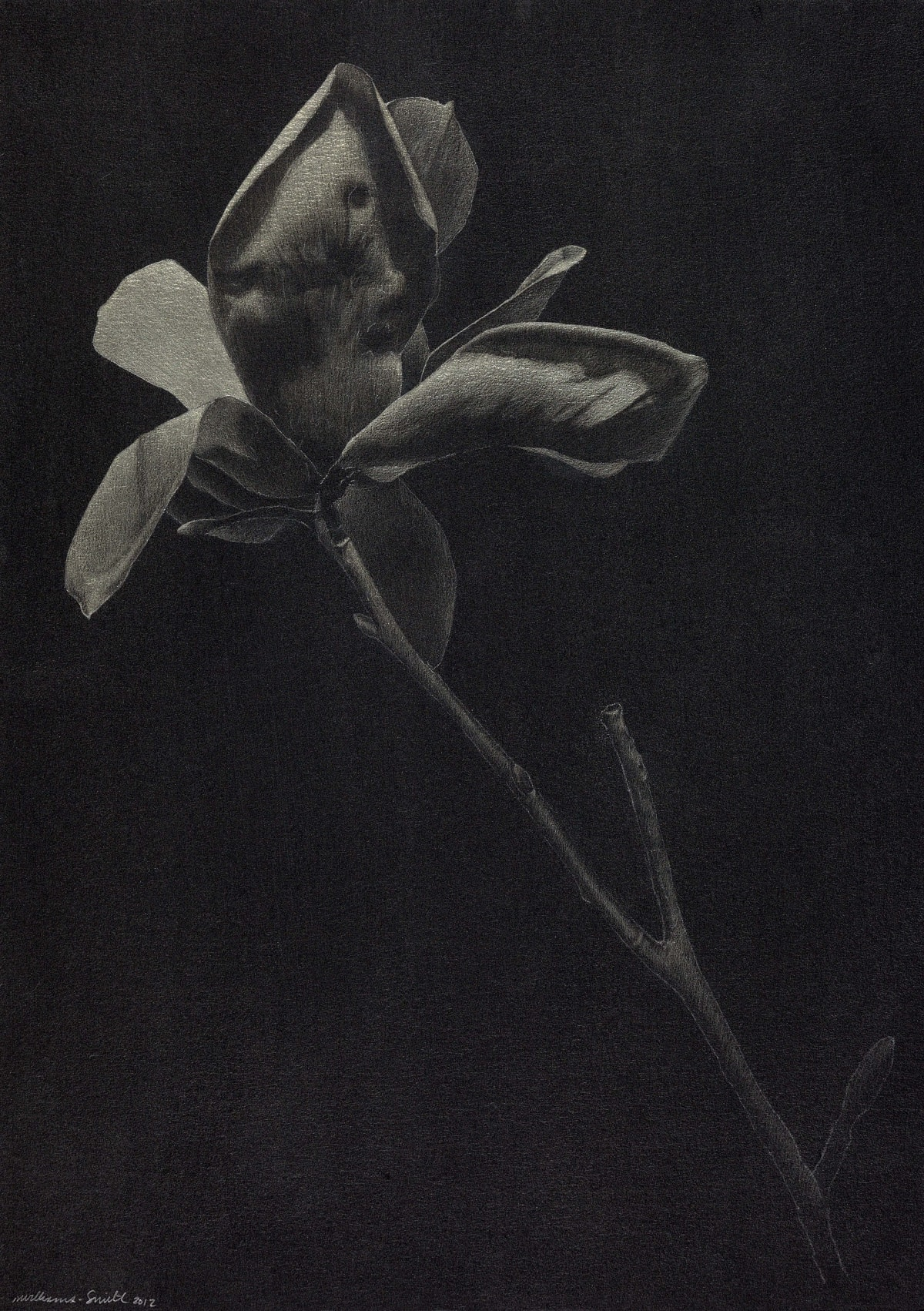Marjorie Williams-Smith Uplifted, 2012 Silverpoint on Black Acrylic Gesso 13 3/4 x 10