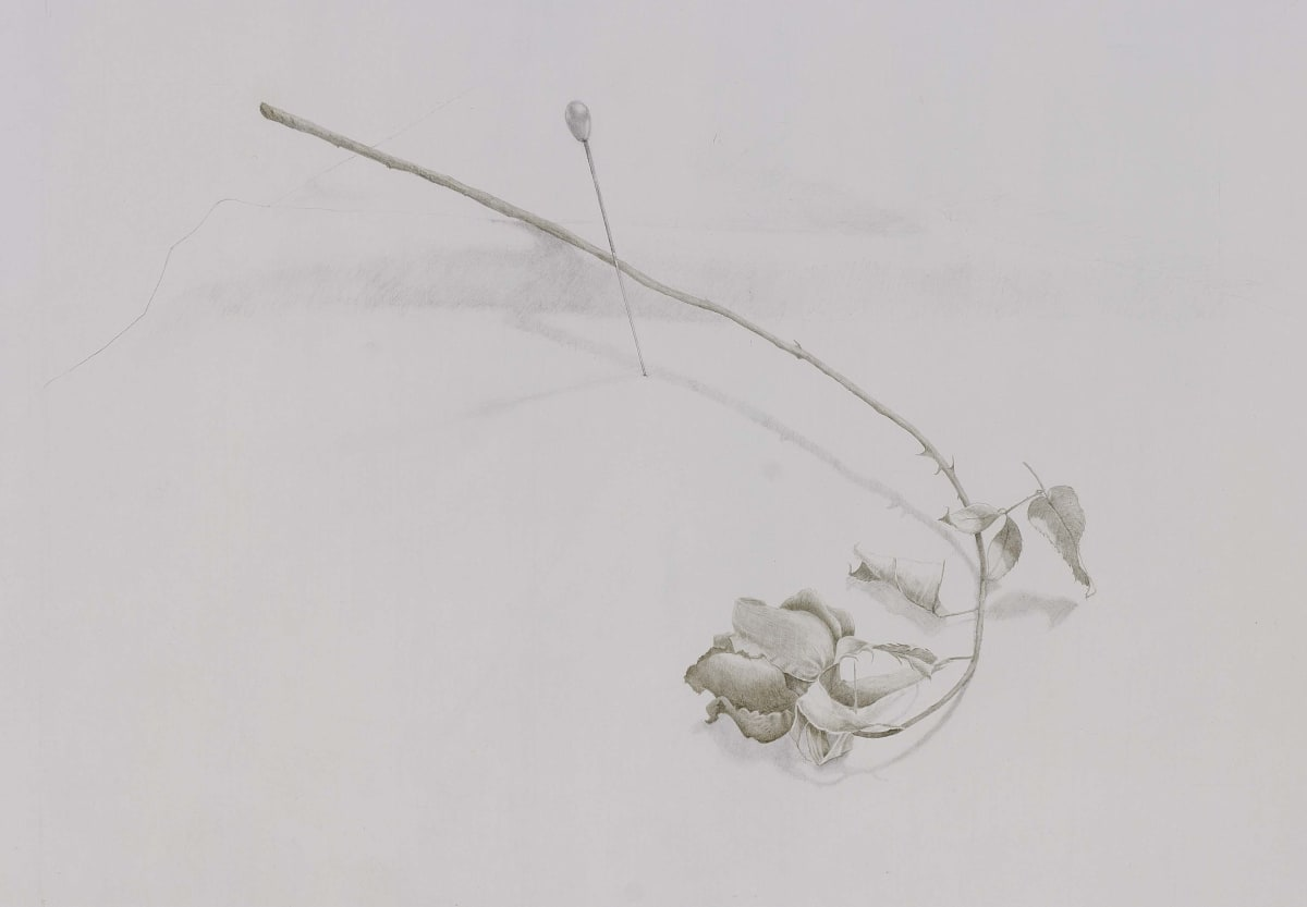 "Marjorie Williams-Smith Pin Rose, 1987 Silverpoint and graphite 8"" x 10"""