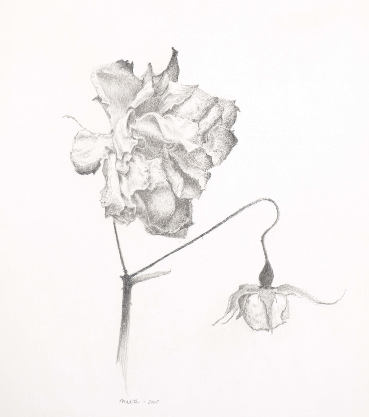 "Marjorie Williams-Smith Old and New , 2010 Silverpoint 6"" x 5 ¼"""