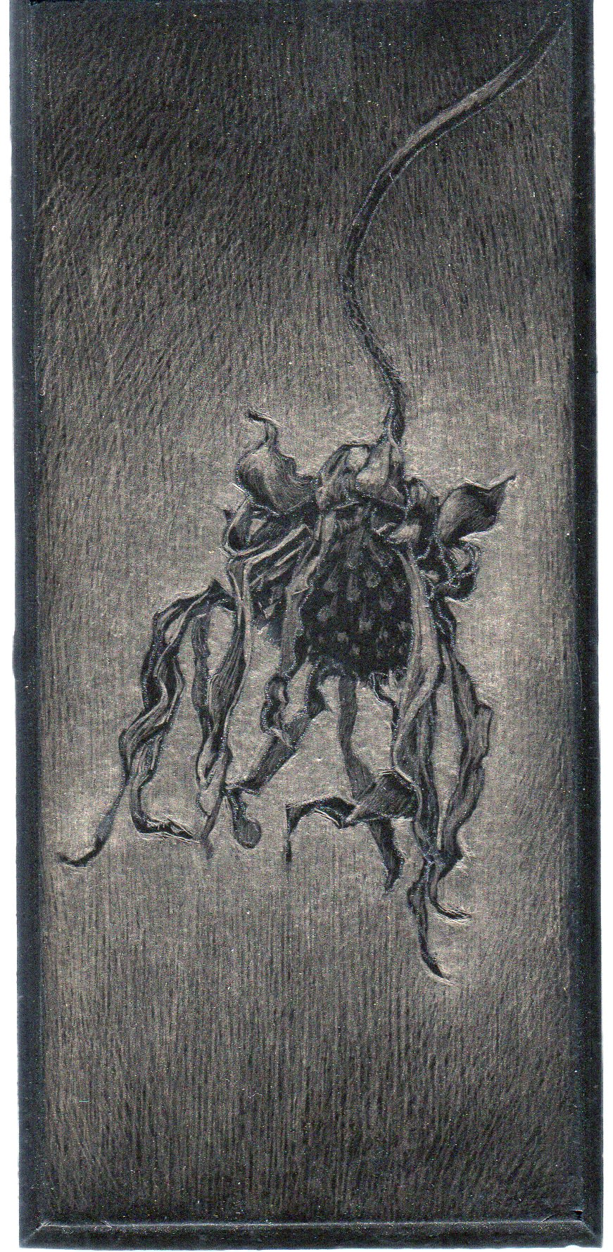"Marjorie Williams-Smith Summer Heat, 2015 Silverpoint on black acrylic gesso 6"" x 2 ¾"""