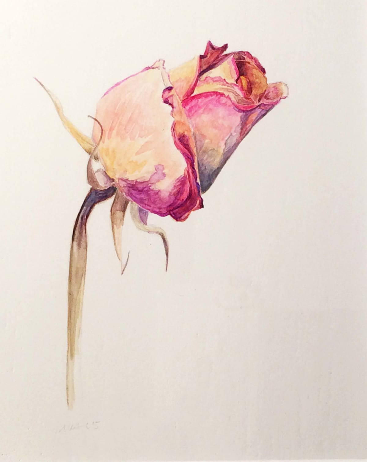 "Marjorie Williams-Smith Pink Rose, 2007 Silverpoint and watercolor 5"" x 4 ½"""