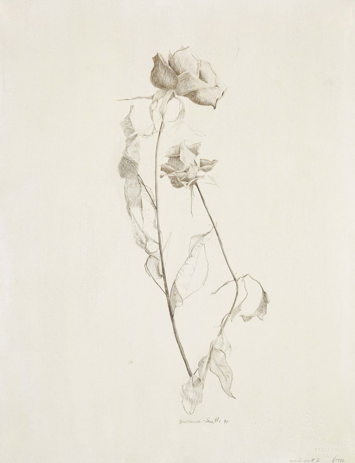 Marjorie Williams-Smith Two Roses #2, 1990 Silverpoint 12 x 9
