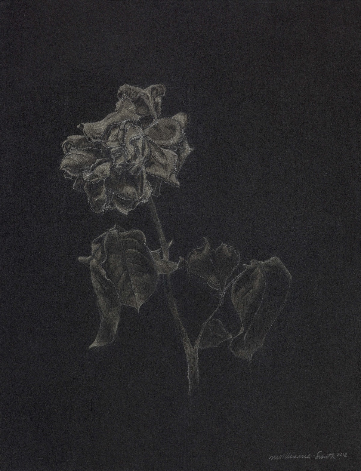 Marjorie Williams-Smith Glimmer, 2012 Silverpoint on Black Acrylic Gesso 9 1/4 x 7 3/16