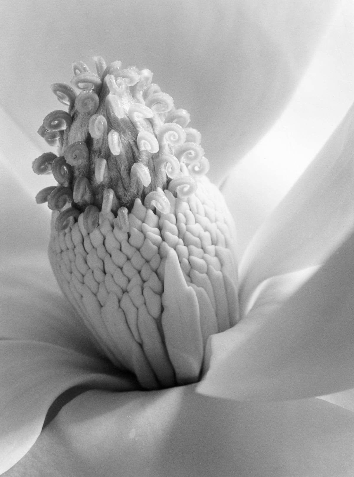 Magnolia Blossom, Tower of Jewels, 1925