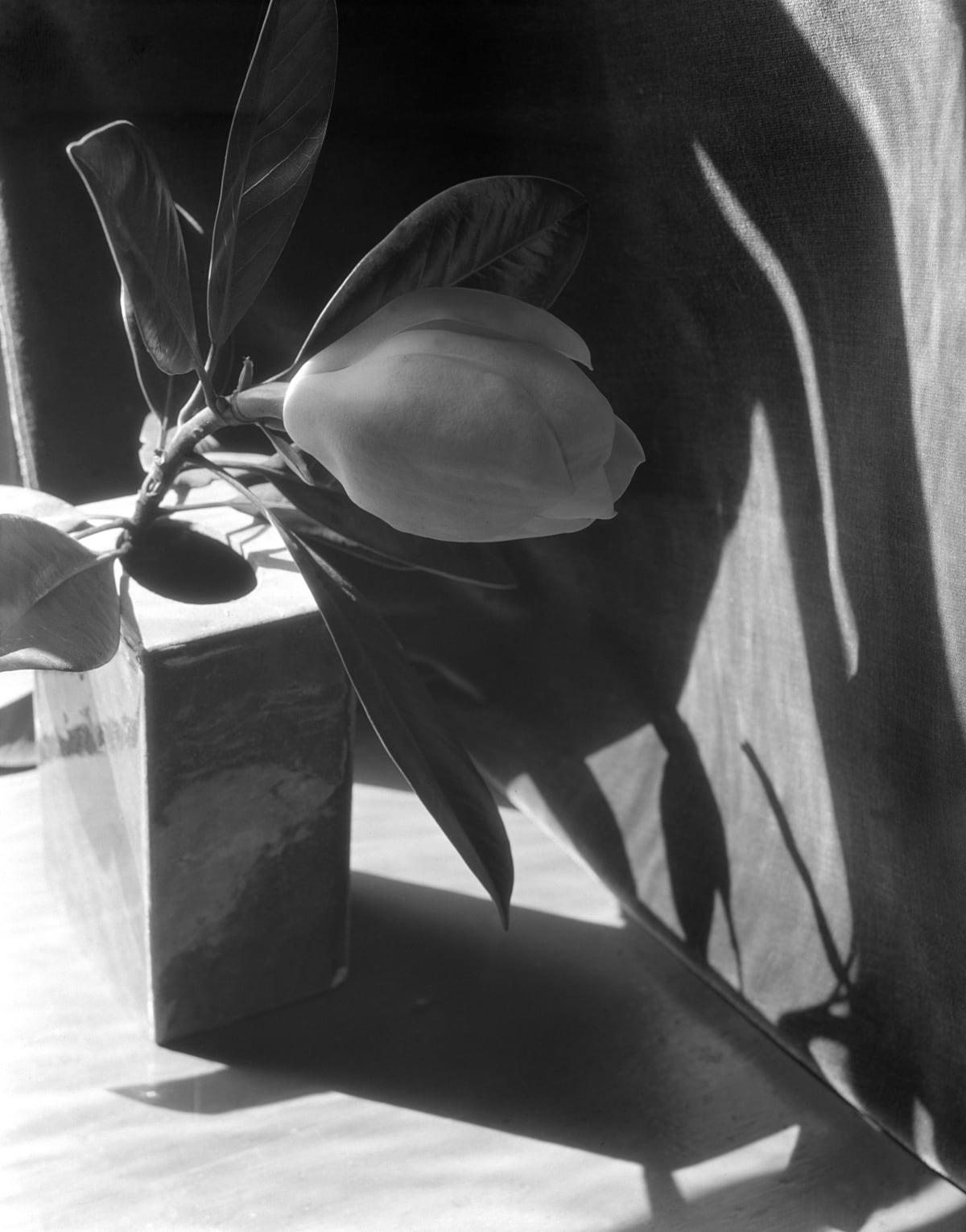Magnolia, Variation on a Theme, 1925