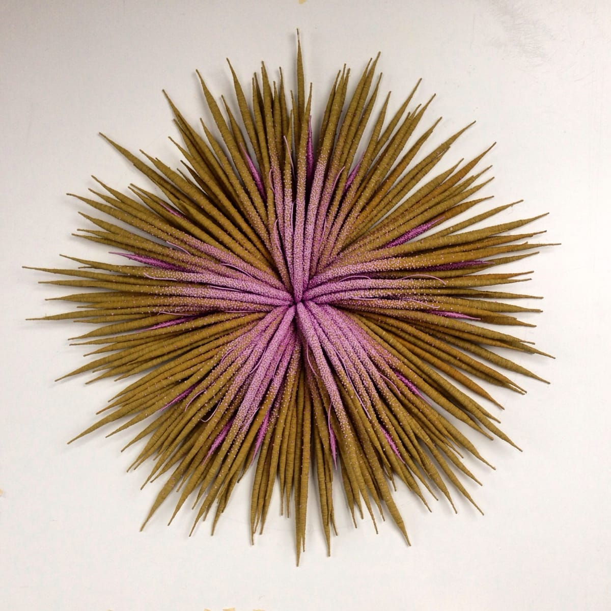 Specimen - New wall sculptures by Catherine Latson