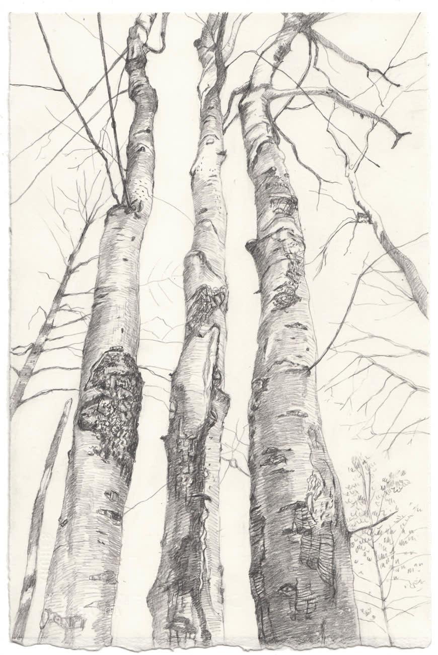Amy Talluto, Three Beech Trees, 2019