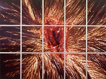 COLLISHAW Mat, Bullet Hole, 1988