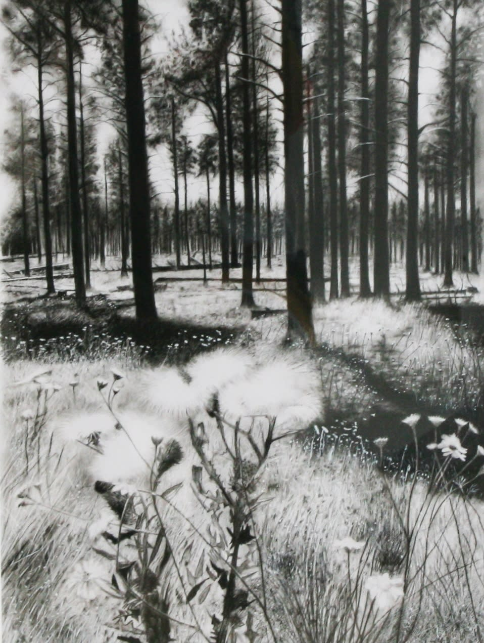 "Andrew Tift Arizona Woods Charcoal, carbon, graphite, acrylic 15.7 x 8"" 40.5 x20.5 cm"