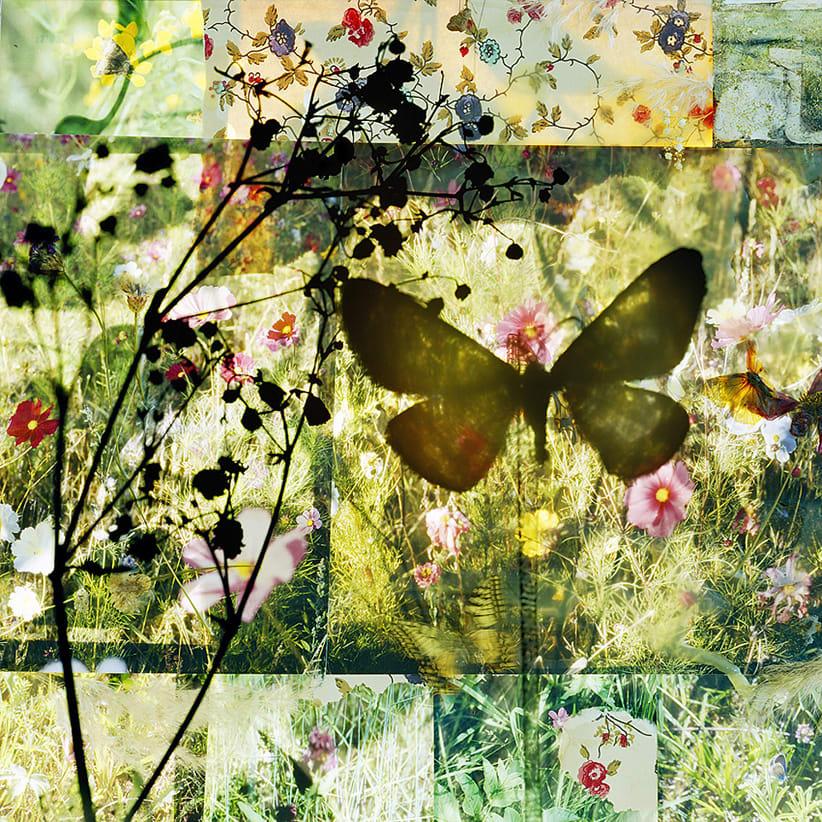 Thomas Zika, Butterflies - I saved an Admiral's life - 15
