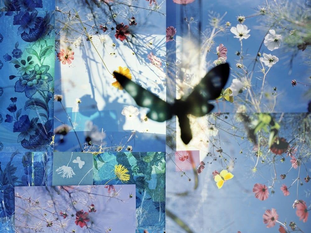 Thomas Zika, Butterflies - I saved an Admiral's life - 01