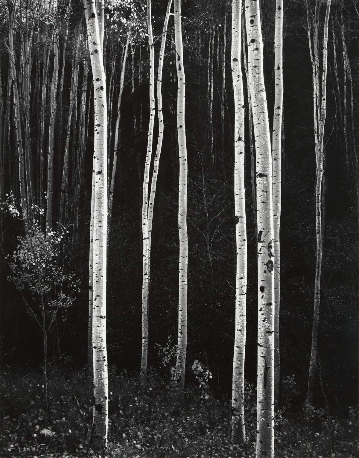 Don Worth, Aspens, Autumn, NM, 1958