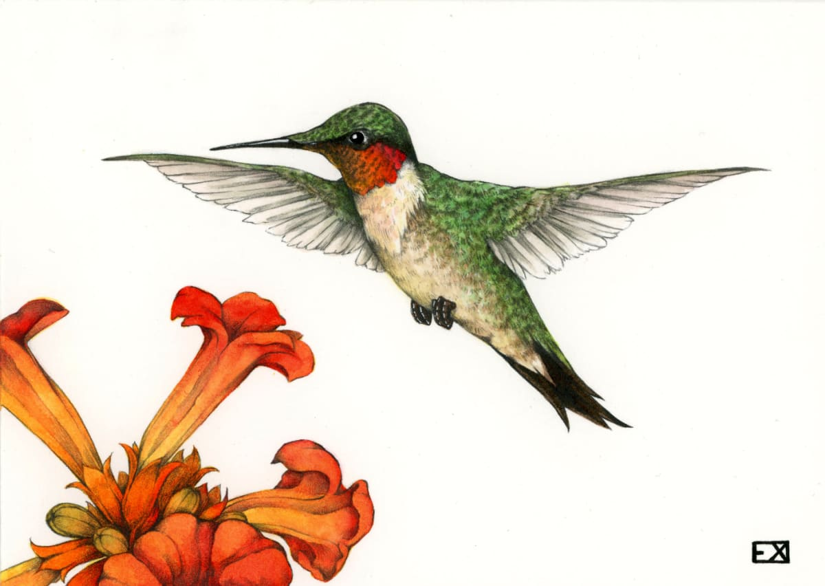 Emma Felt, Ruby-Throated Hummingbird and Trumpet Vines, 2019