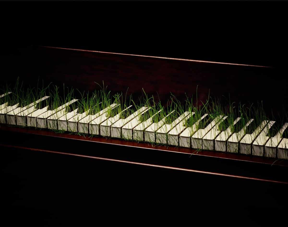 Nancy FOUTS, Piano with grass, 2013