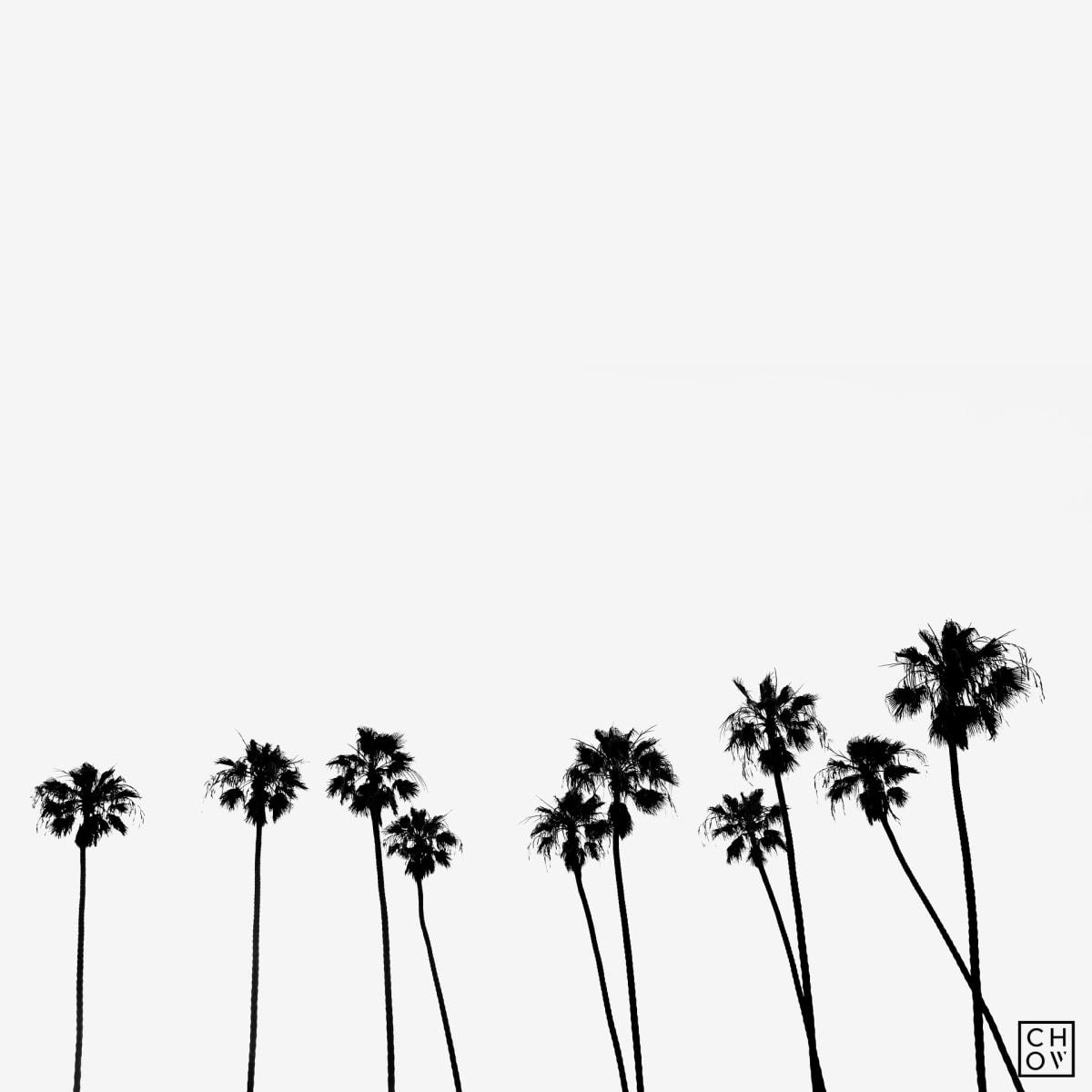 Austin Chow, Palms // California, 2018