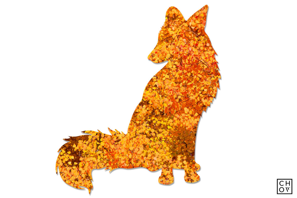 Austin Chow, Fall // Fox Avatar, 2018