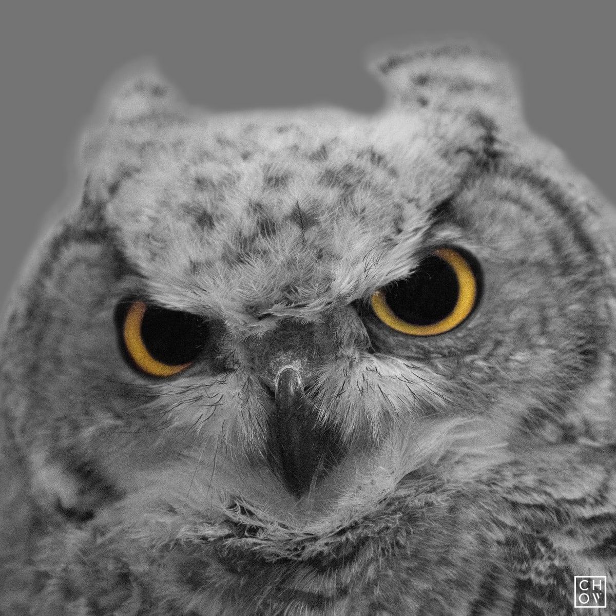 Austin Chow, Five // Owl Eyes, 2016