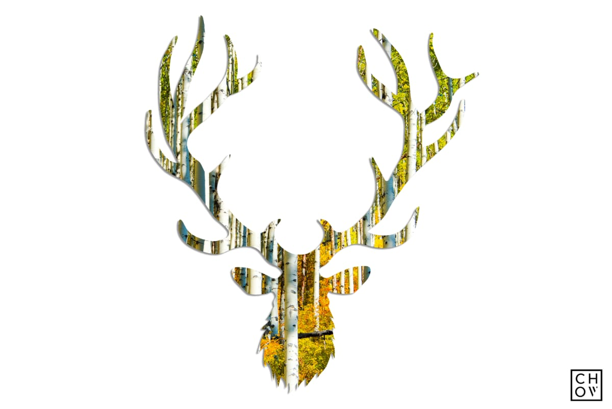 Austin Chow, Autumn // Elk Avatar, 2018