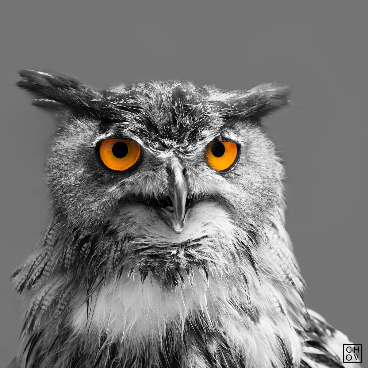 Austin Chow, One // Owl Eyes, 2016