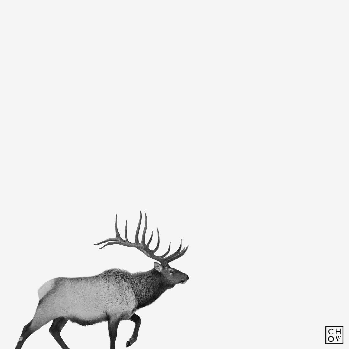 Austin Chow, Elk // Jackson, Wyoming, 2019