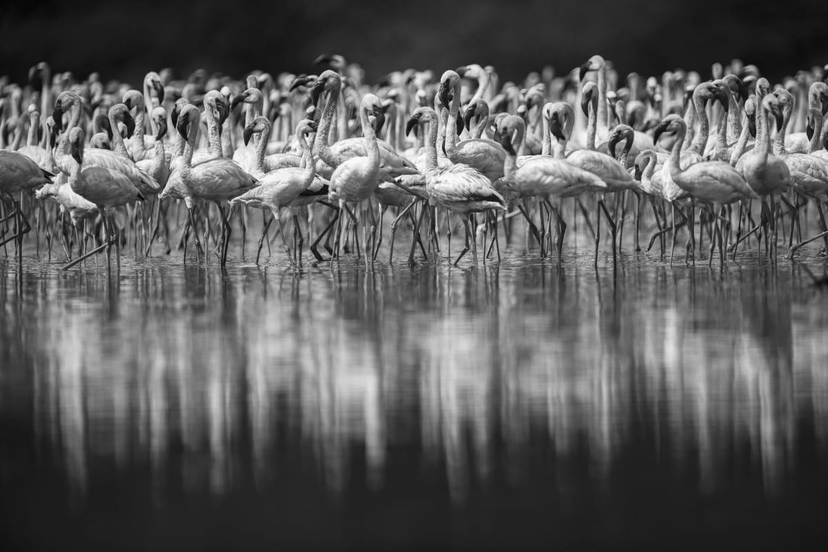 Luciano Candisani, Flamingos, Quênia, 2019