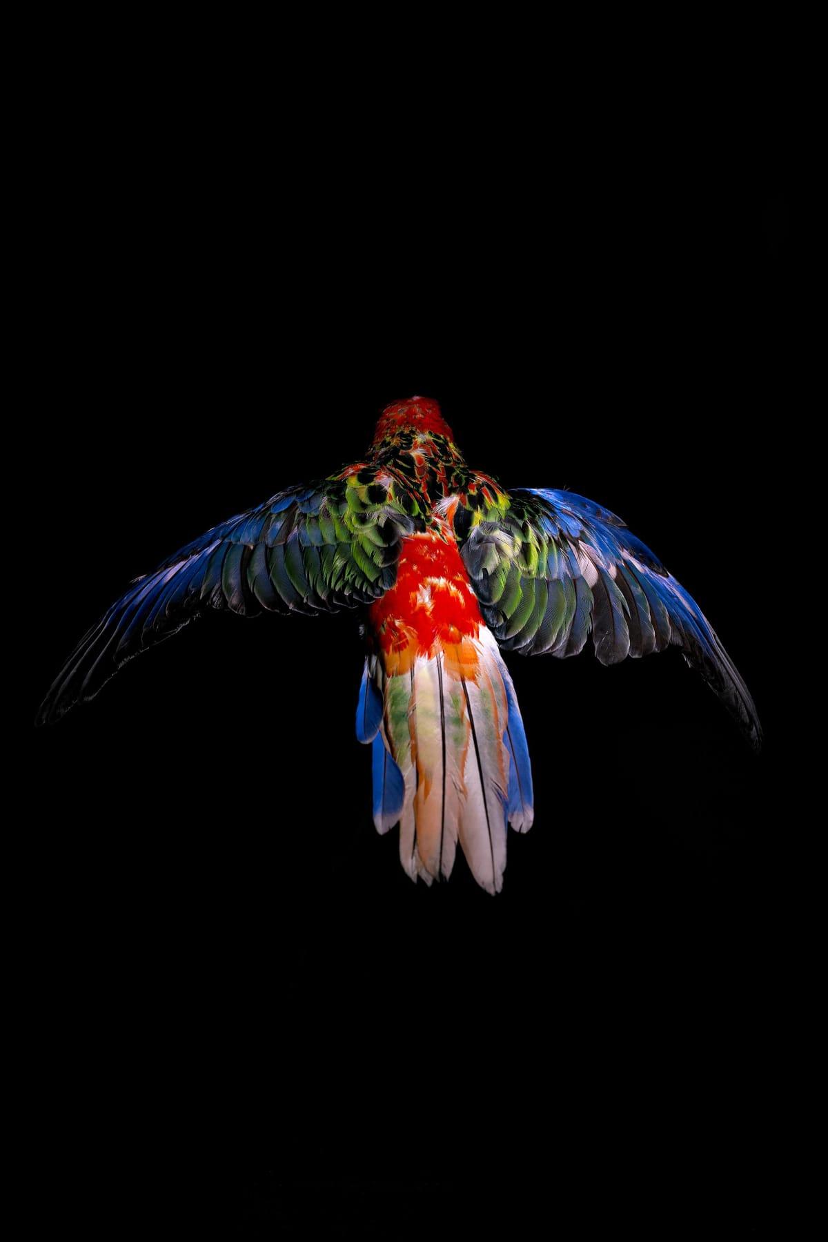 Lucas Lenci, Oiseau 3, 2015 - 2019