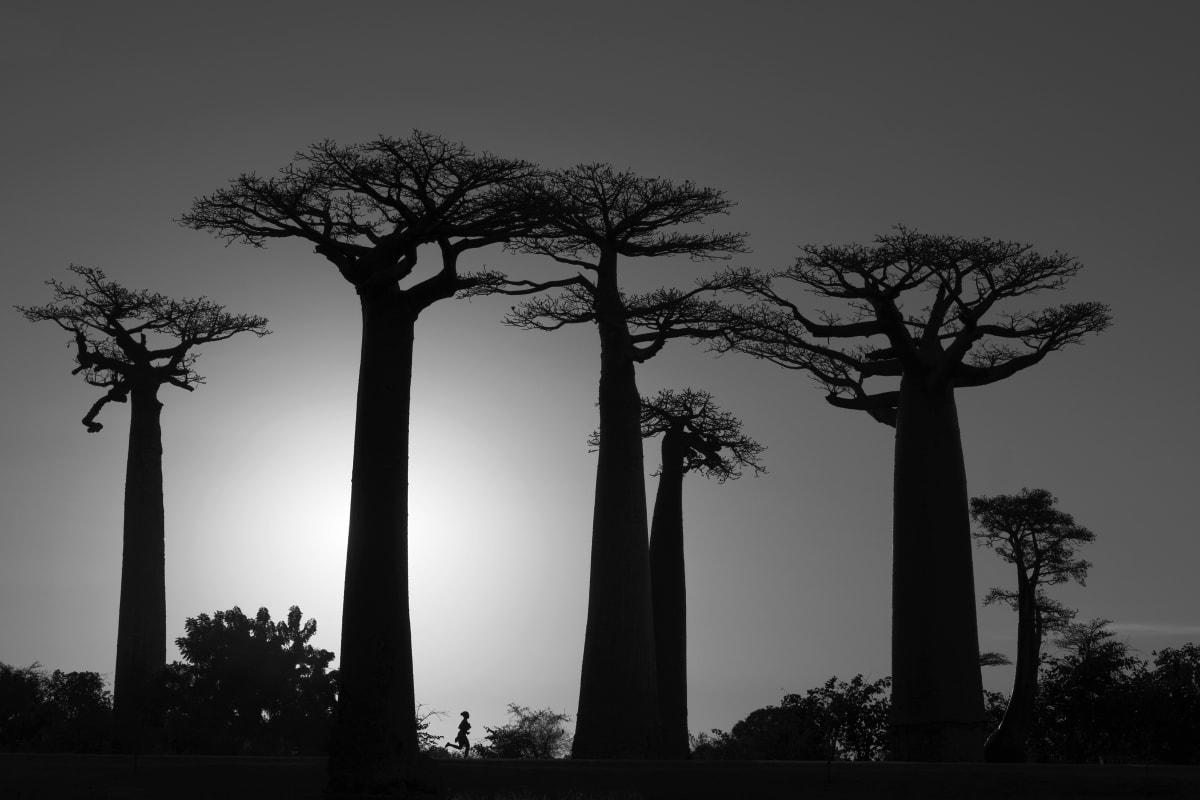 Luciano Candisani, Baobás, Madagascar, 2019