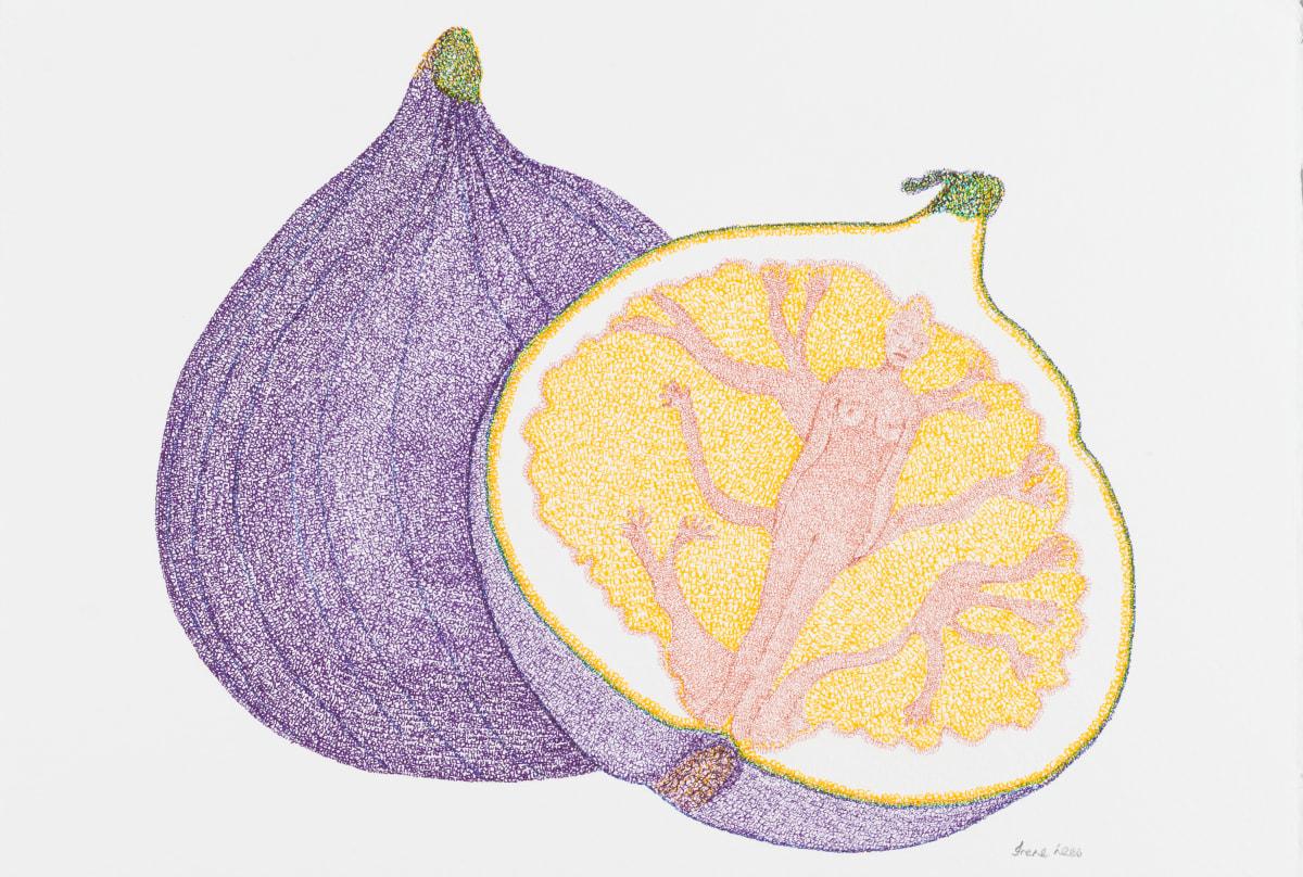 Irene Lees, The Fig Tree, 2019