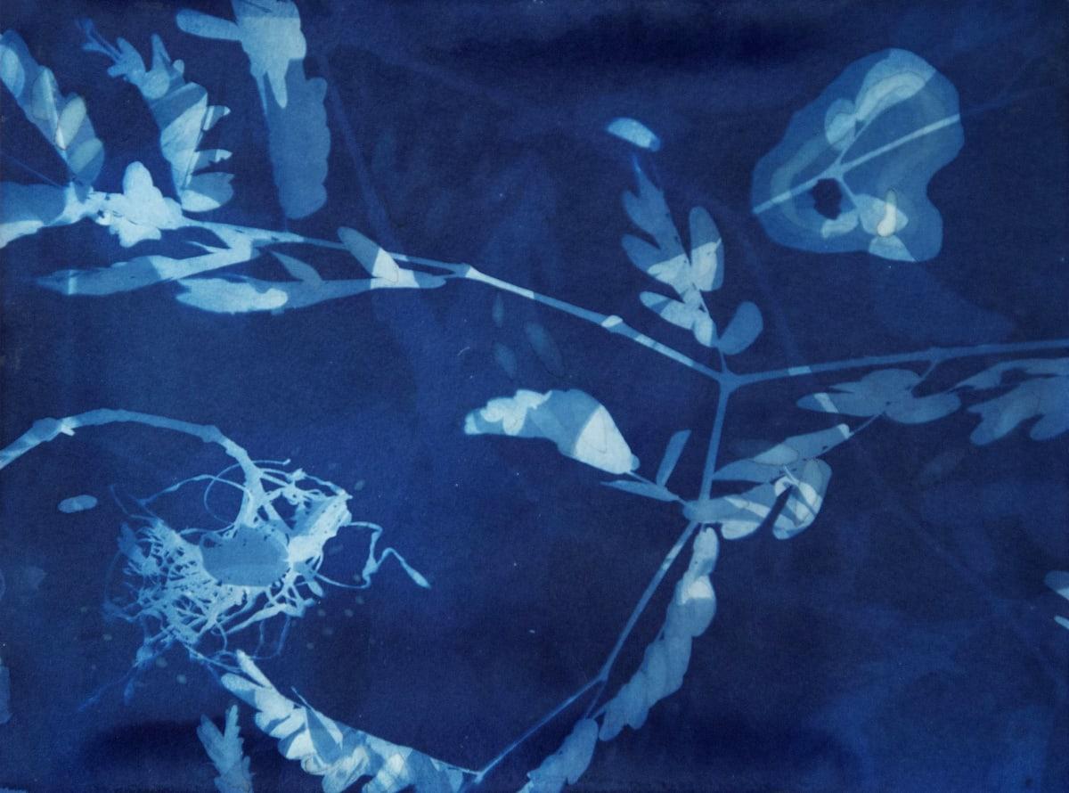Allison Svoboda Cyano 25/82-1 Cyanotype on paper mounted on cradleboard