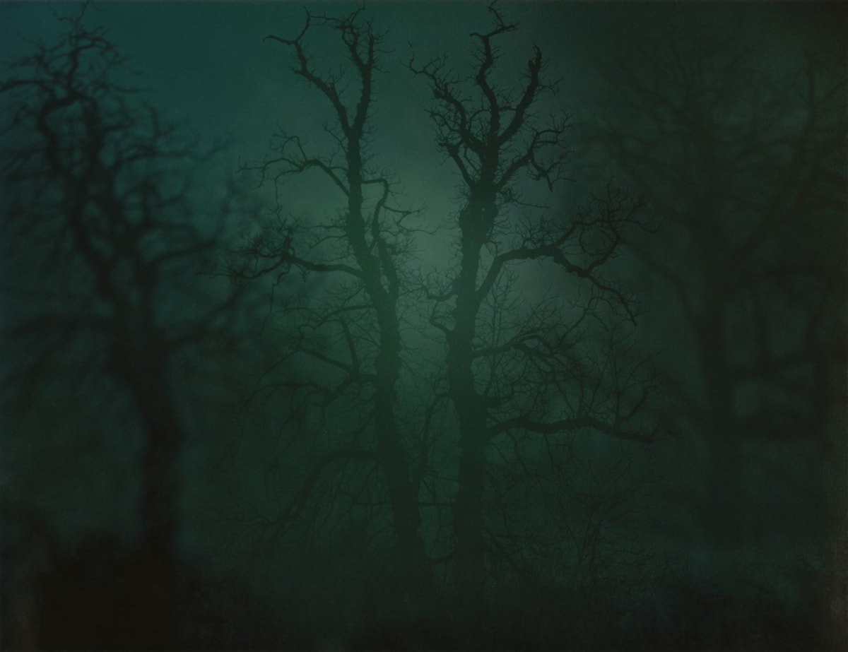 Nicholas Hughes In Darkness Visible no. 14 [Verse I], 2007 Chromogenic photograph 81.3 x 101.6 cm 32 x 40 in Edition of 5